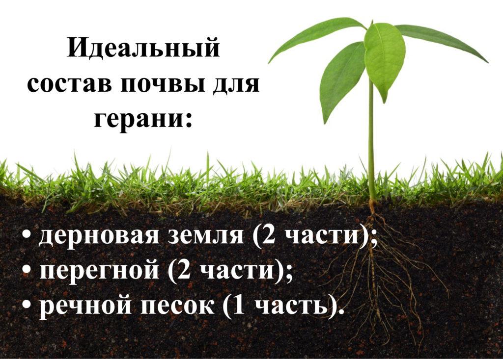 Идеальная почва для герани